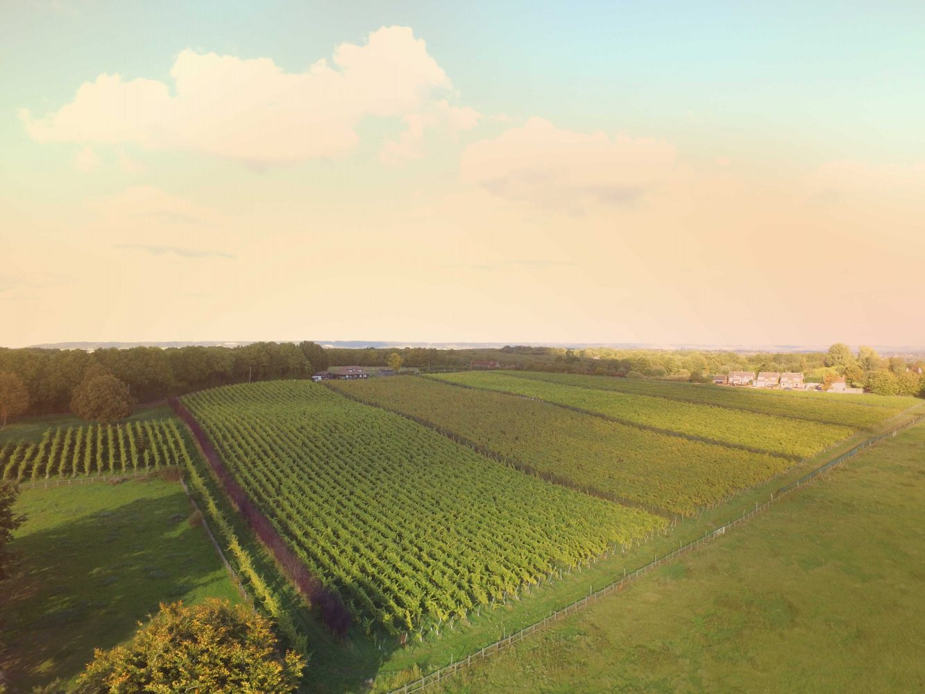 Case Study - Redhill Farm Estate Vineyard - Fileder Filter Systems